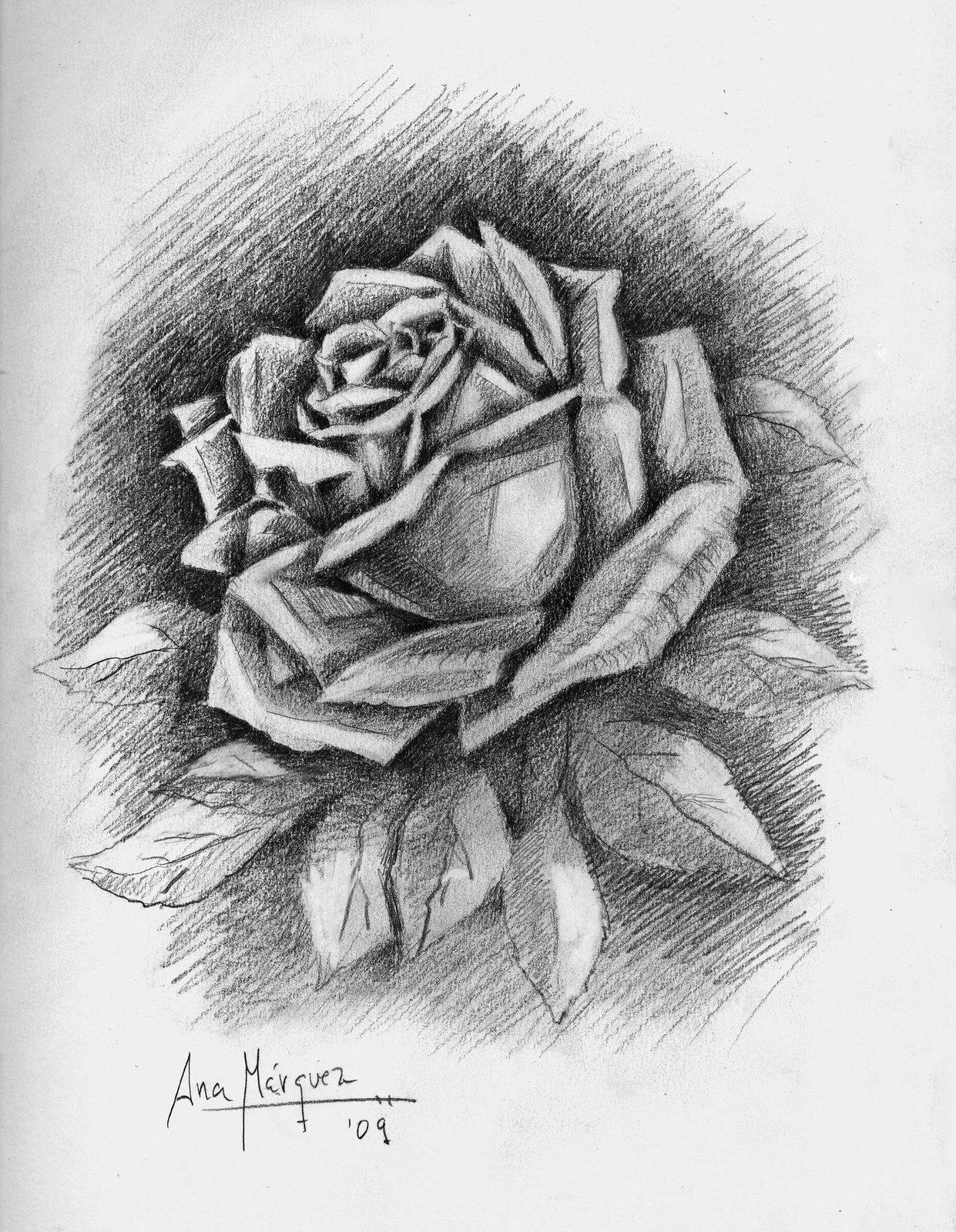 Dibujos de rosas a lapiz graphic transparent stock Dibujos de rosas a lapiz - ClipartFest graphic transparent stock