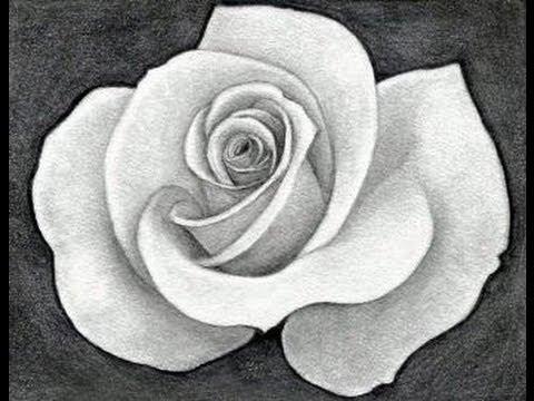 Dibujos de rosas a lapiz image free library Como dibujar una rosa paso a paso - YouTube image free library