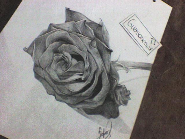 Dibujos de rosas a lapiz png freeuse stock Recien terminado (Dibujo de rosa a lápiz) - Taringa! png freeuse stock
