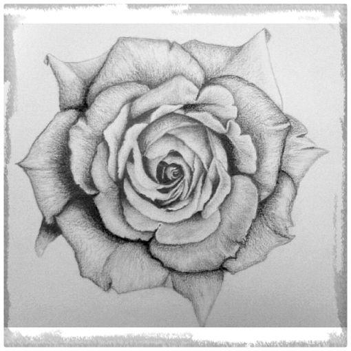 Dibujos de rosas a lapiz clip transparent download Imagenes De Dibujos A Lapiz De Rosas | Dibujos de Amor a Lapiz clip transparent download