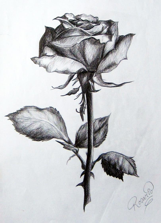 Dibujos de rosas a lapiz picture black and white download Dibujos de rosas a lapiz - ClipartFest picture black and white download