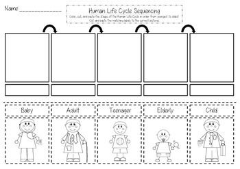 Different stages of growth with tags clipart vector library stock Human Life Cycle Sequencing Cut and Paste | | 1st Grade ... vector library stock