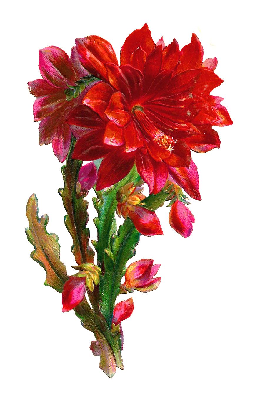 Digital flower clipart clip art freeuse Gorgeous Flower Clipart clip art freeuse