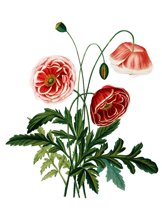 Digital flower clipart clip royalty free download Digital Scrapbooking Flowers clip royalty free download