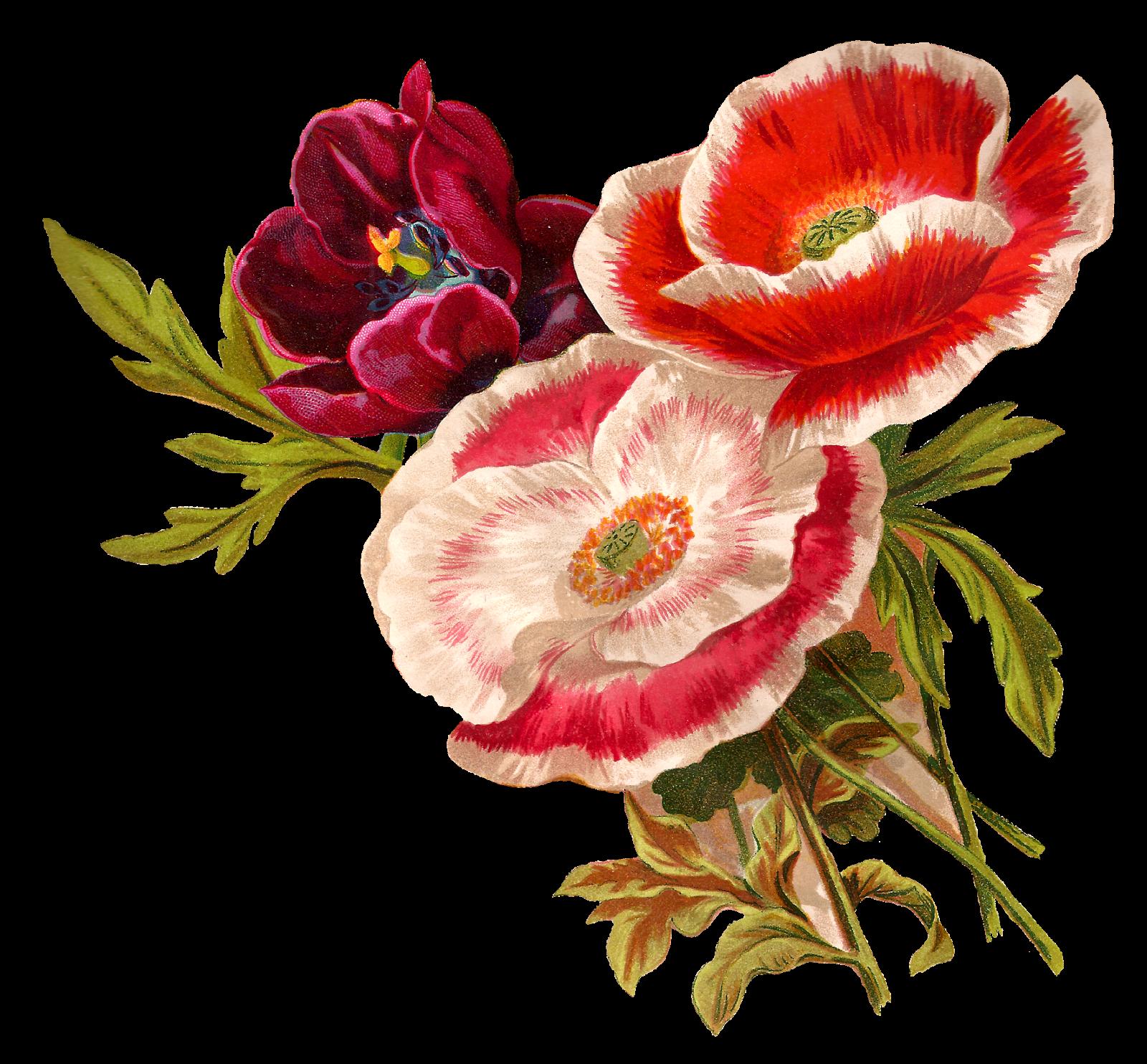 Digital flower clipart png black and white stock Antique Images: Vintage Poppy Flower Clip Art Botanical Artwork ... png black and white stock