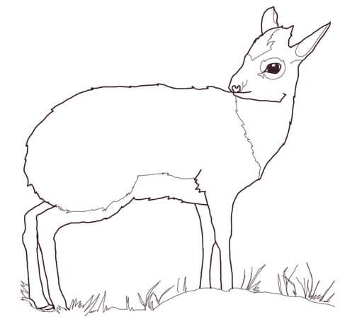 Dikdik clipart clip art library Dik Dik Antelope coloring page | Free Printable Coloring Pages clip art library