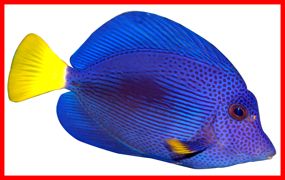 Discus fish clipart png freeuse library Inspiring Aquarium On Scratch For Discus Fish Png Inspiration And Pc ... png freeuse library