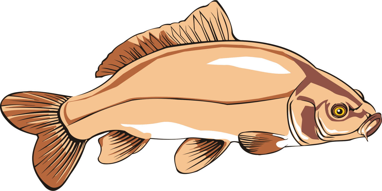 Disney catfish clipart vector library stock Channel Catfish Drawing | Free download best Channel Catfish Drawing ... vector library stock