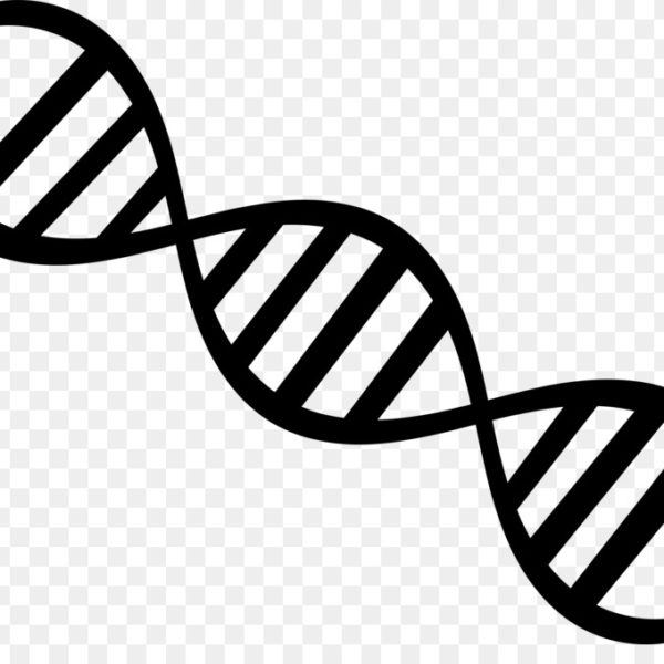 Dna clipart images clip art freeuse download Download Free png Dna Nucleic Acid Double Helix Genetics Clip Art ... clip art freeuse download