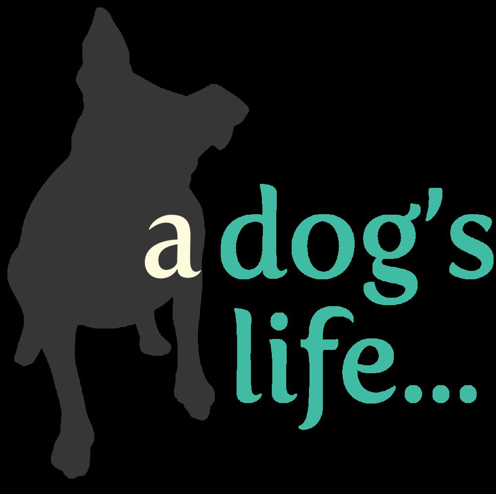 Dog agility clipart jpg transparent stock Upcoming Dog Training Classes jpg transparent stock