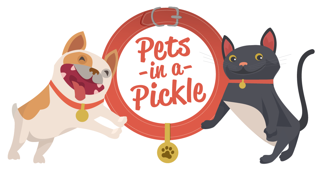 Dog and cat cuddling clipart image transparent download Pet Insurance For Cats & Dogs | Pets In A Pickle image transparent download