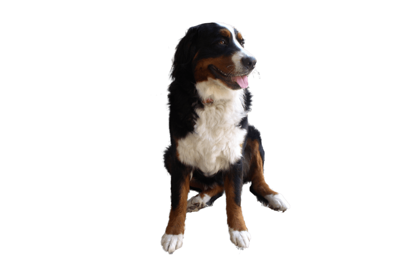 Dog begging clipart png freeuse library cute dog png - Free PNG Images | TOPpng png freeuse library