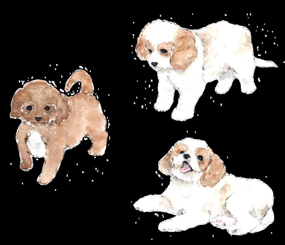 Dog bite clipart png download Cavachon — Foxglove Farm png download