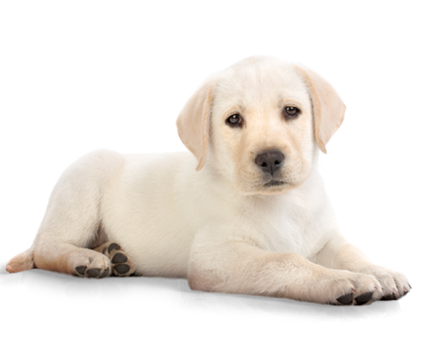Dog cam clipart clip freeuse library Dog Transparent PNG Pictures - Free Icons and PNG Backgrounds clip freeuse library