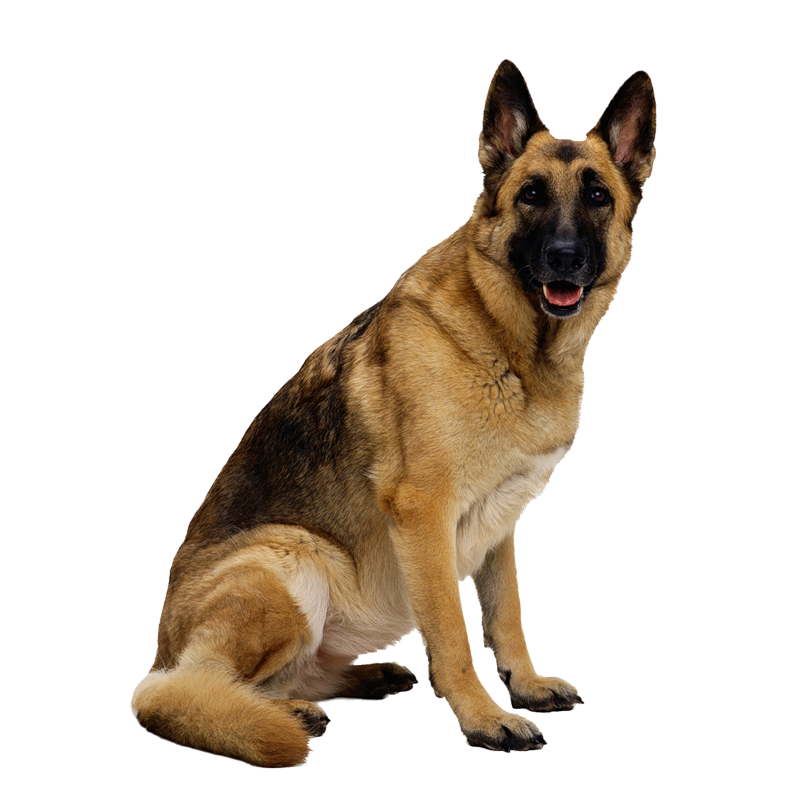 Dog cam clipart banner library library Dog Png PNG Image - PurePNG   Free transparent CC0 PNG Image Library banner library library
