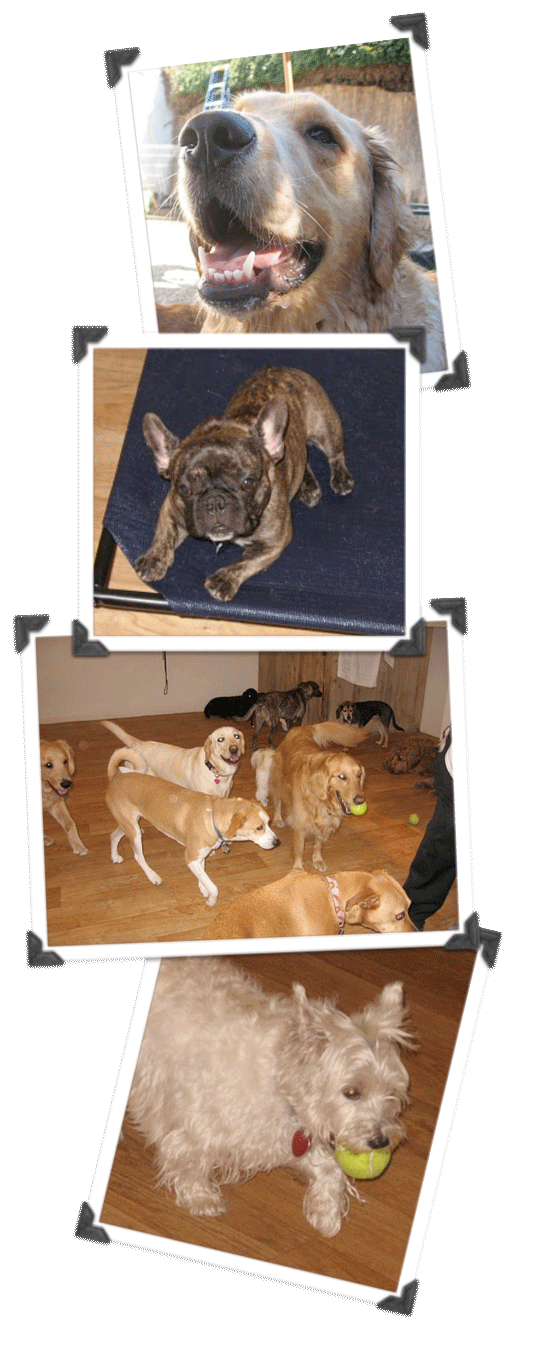 Dog care clipart graphic library stock About Dog Day Care, Dog Boarding, Dog Sitting Santa Barbara Pet ... graphic library stock