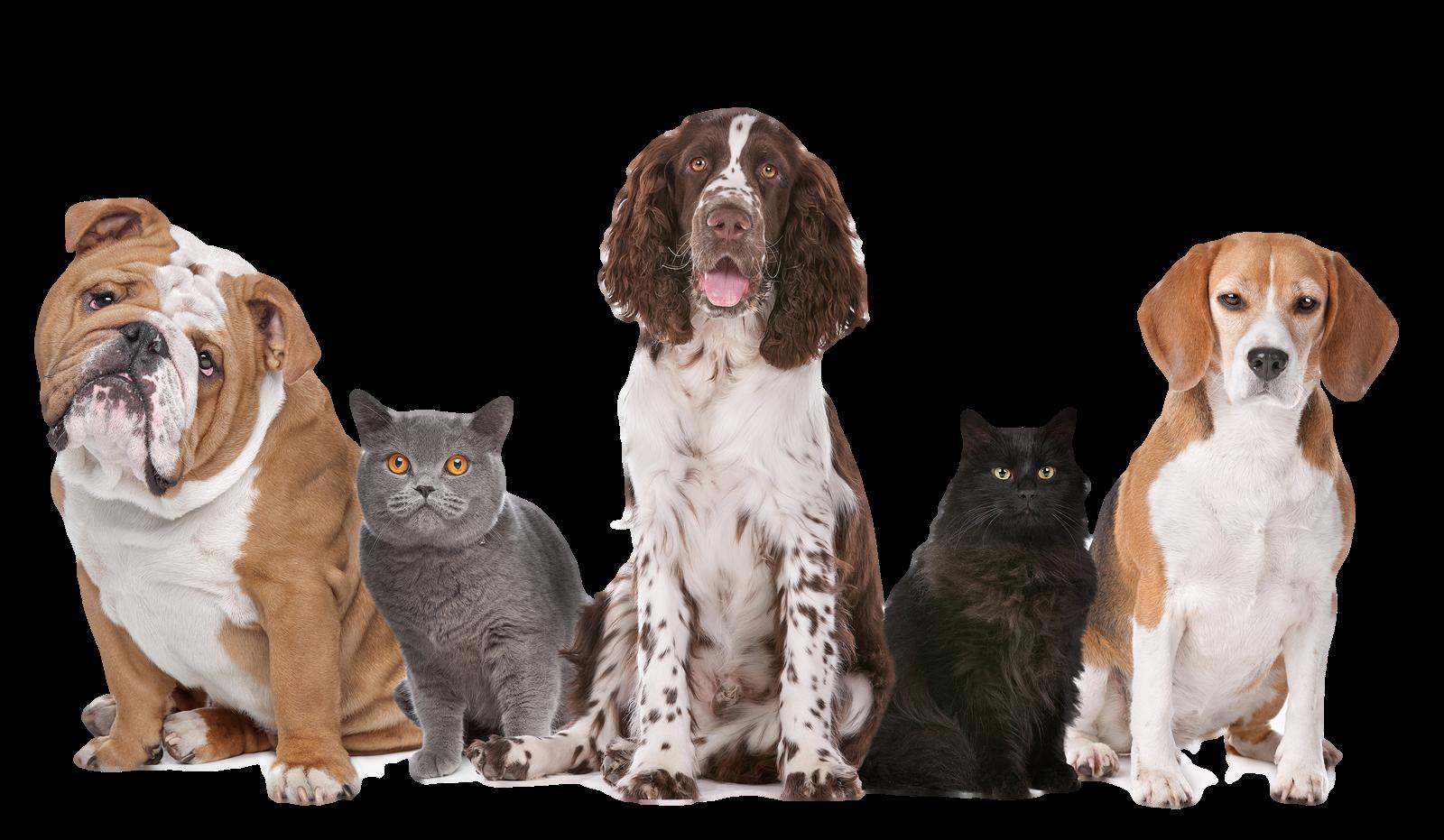 Dog cat clipart png transparent vector free library Cats And Dogs PNG HD Transparent Cats And Dogs HD.PNG Images. | PlusPNG vector free library