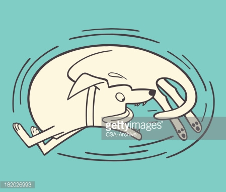 Dog chase tail clipart image black and white library Dog Chasing Its Tail Vector Art | Getty Images image black and white library