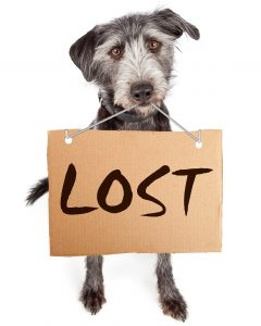 Dog chasing leaves clipart clip royalty free stock Lost Dog Behavior | Kat Albrecht - Missing Animal Response Network clip royalty free stock