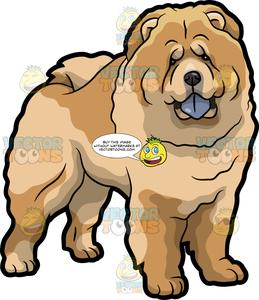 Dog chow clipart image library stock A Very Cute Chow Chow Dog image library stock