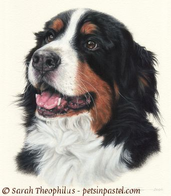 Oil trapper bernese mountain. Dog clipart pastel