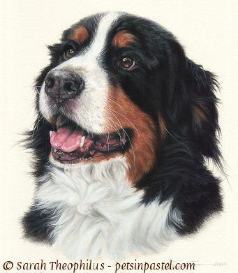 Dog clipart pastel svg transparent download Oil Pastel Dog | Trapper - Bernese Mountain Dog Paintings ... svg transparent download