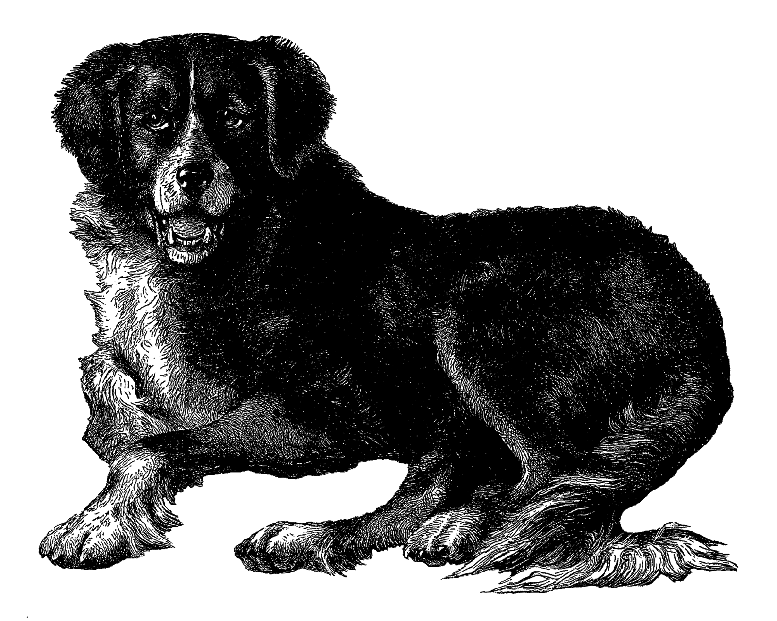 Dog clipart royalty free banner library newfoundland dog clipart free - Clipground banner library