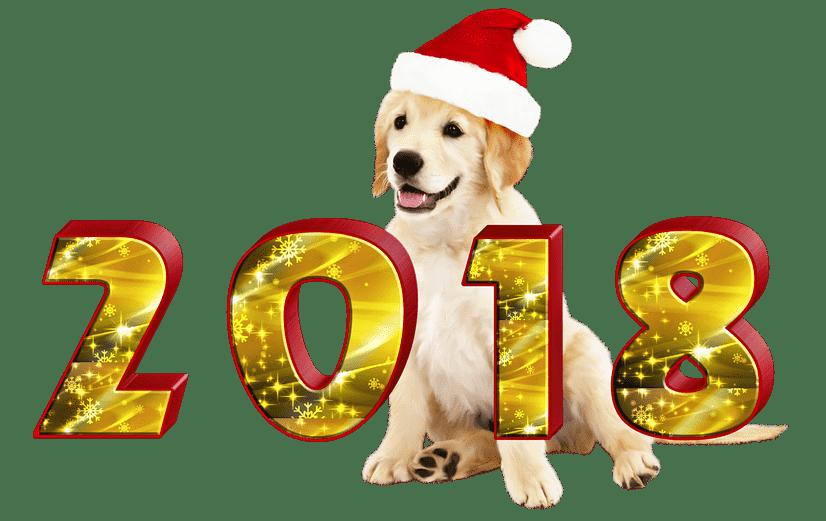 Dog dancing clipart clipart 2018 Dancing transparent PNG - StickPNG clipart