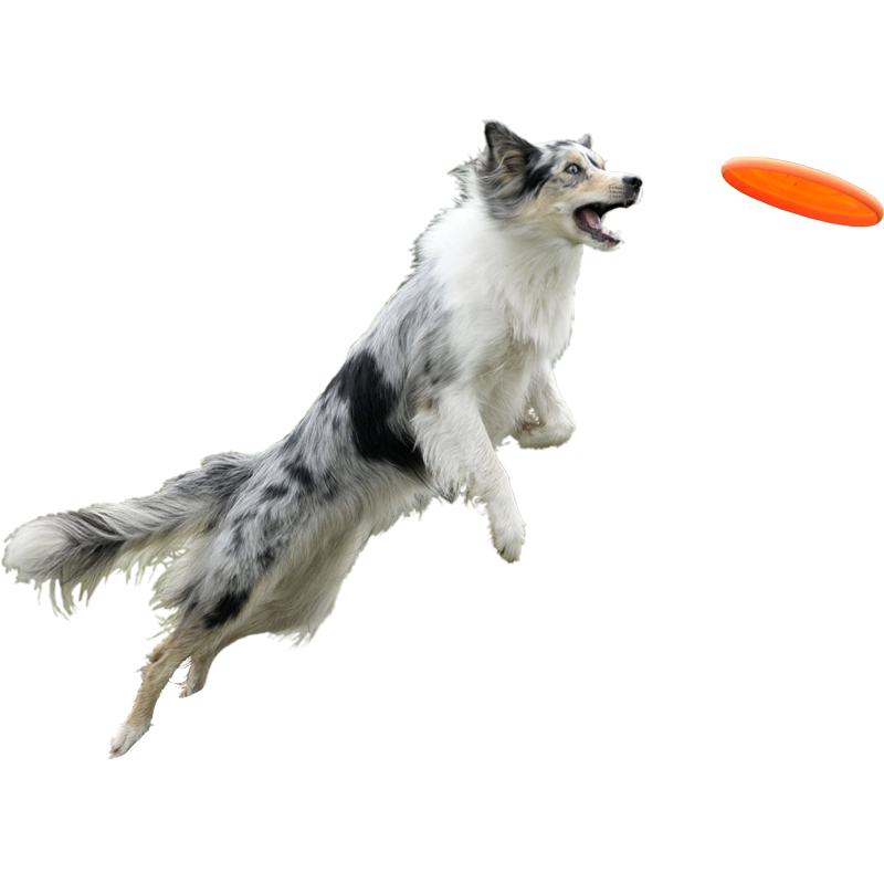 Dog frisbee clipart graphic black and white stock Chien et frisbee | Entourage | Pinterest | Photoshop, People and ... graphic black and white stock