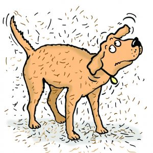 Dog hair clipart picture download Dog Hair Clipart picture download