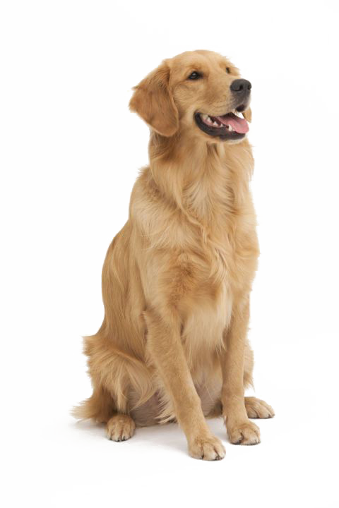 Dog tongue clipart. Png images download resources
