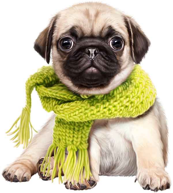 Dog in clothes clipart clip free chiens,dog,puppies,wallpapers | Clipart | Pinterest | Wallpaper, Dog ... clip free