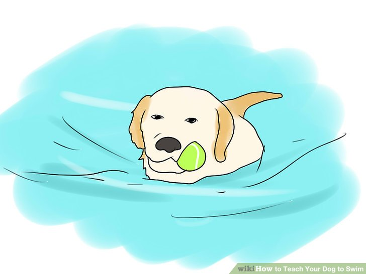 Dog in pool clipart picture transparent download How to Teach Your Dog to Swim: 9 Steps (with Pictures) - wikiHow picture transparent download