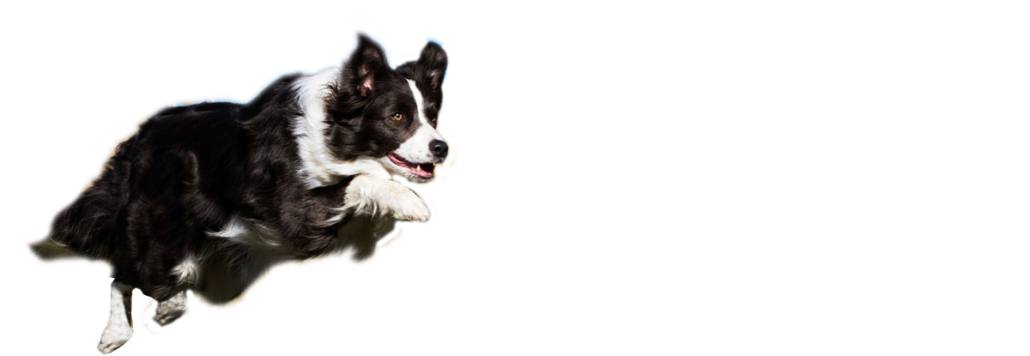 Dog jumping through hoop clipart. Agility resources thats my