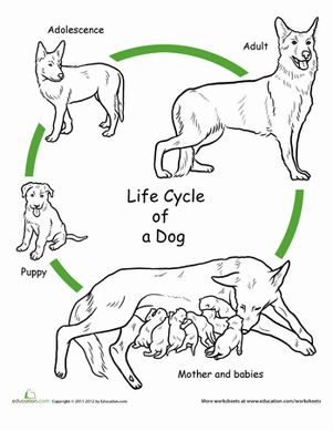 Dog life cycle clipart jpg royalty free stock Dog life cycle clipart - ClipartFest jpg royalty free stock
