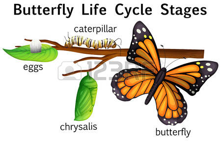 Dog life cycle clipart clipart free download 90 Butterfly Life Cycle Cliparts, Stock Vector And Royalty Free ... clipart free download