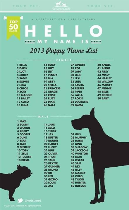 Dog name plate max clipart image transparent download 17 Best ideas about Dog Names on Pinterest | Puppy names, Boy dog ... image transparent download