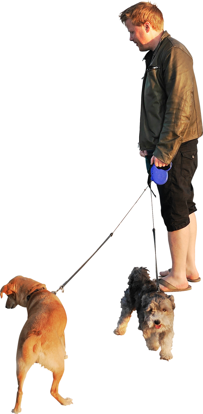 Dog obedience clipart free Dog walking Clip art - dogs 689*1400 transprent Png Free Download ... free