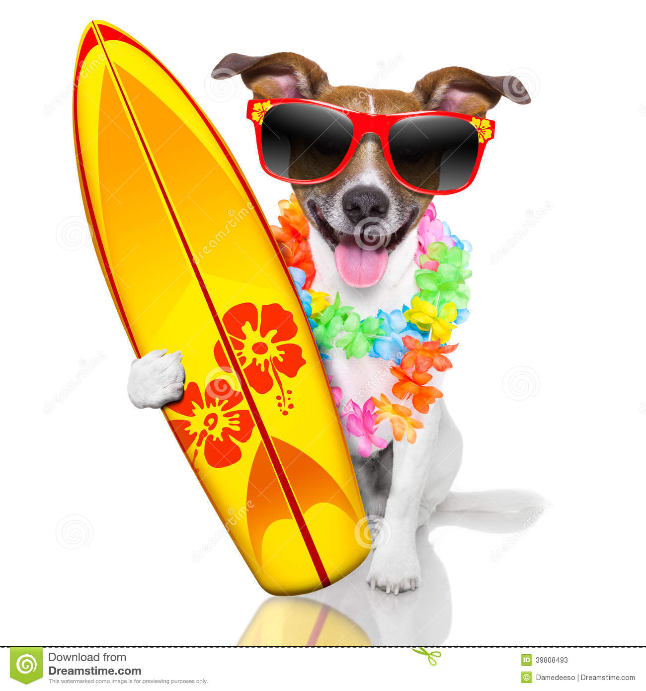 Dog on surfboard clipart jpg transparent Surfer Dog Stock Photo - Image: 39808493 jpg transparent