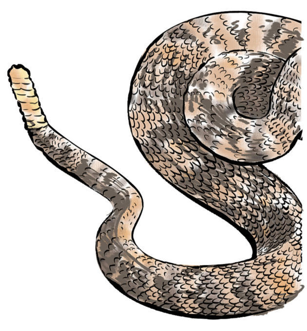 Dog shaking rattlesnake clipart png free library Don\'t look now, but that creepy, crawly thing may be lethal ... png free library