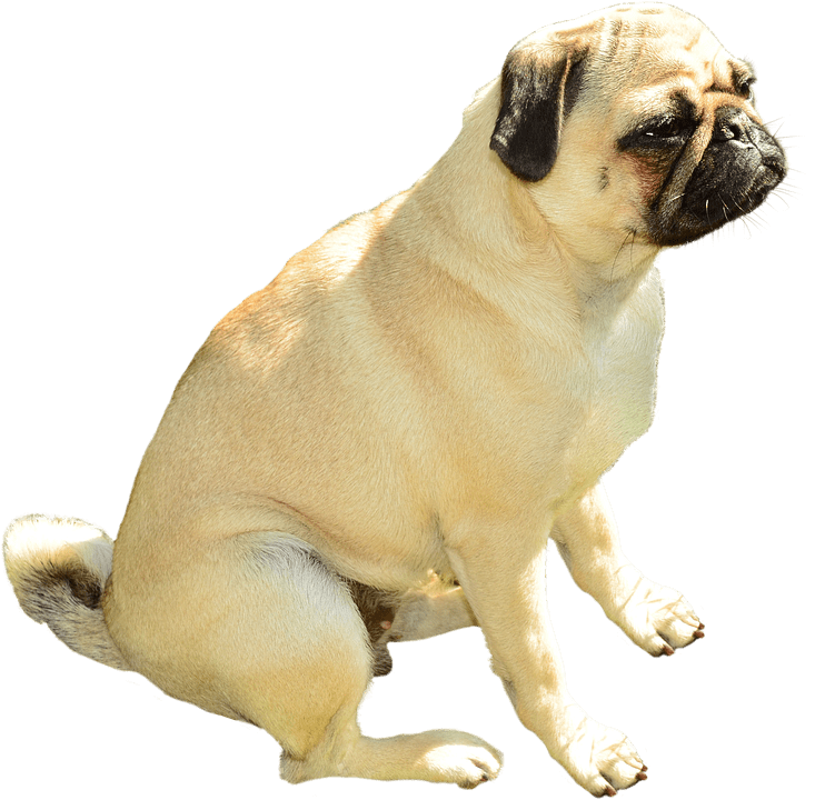 Dog sitting side view clipart clip royalty free Bulldog Sitting transparent PNG - StickPNG clip royalty free