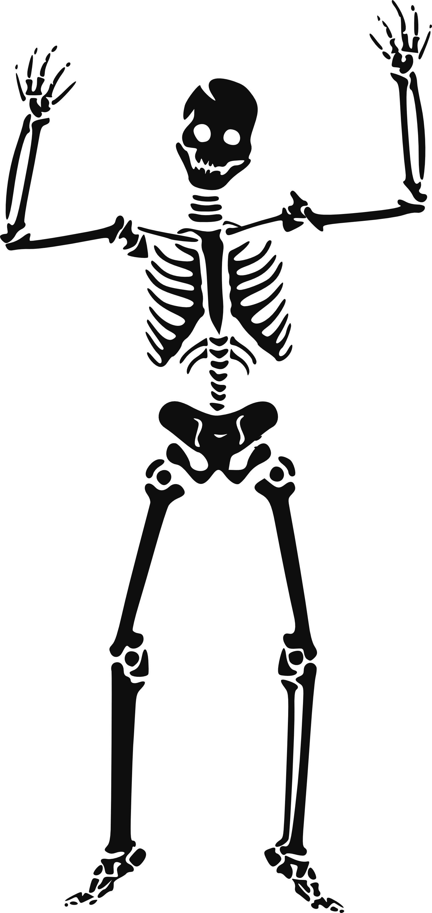 Dog skeleton clipart download Bone skeleton clipart, explore pictures download
