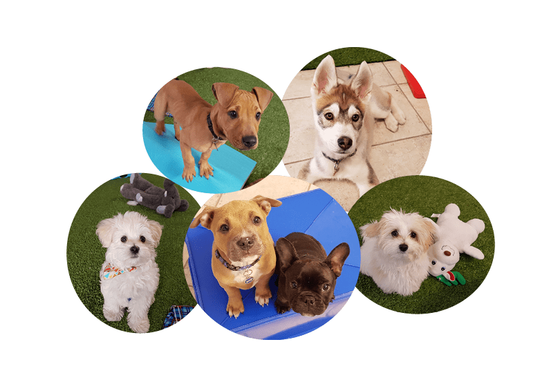 Dog sniffing ground clipart free png freeuse Crosspaws Dog Training - Puppies png freeuse