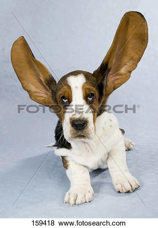 Dog with big ear clipart clip art transparent library Pictures of Basset dog - puppy with big ears - cut out 159418 ... clip art transparent library