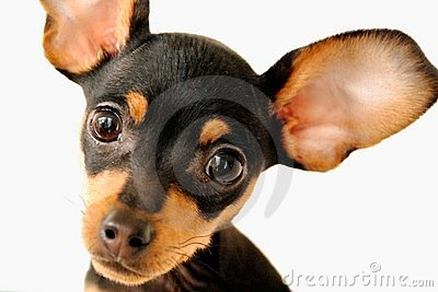 Dog with big ear clipart image library stock Dog with big ear clipart - ClipartFest image library stock