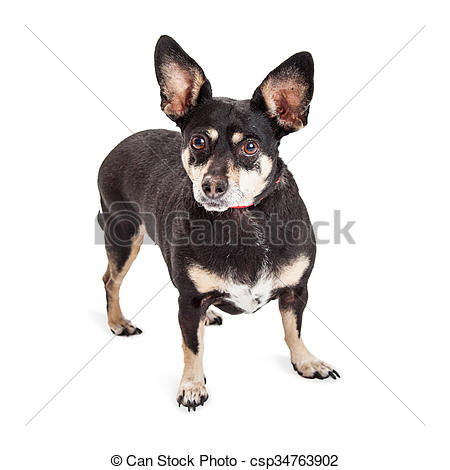 Dog with big ear clipart picture transparent stock Stock Photography of Little Mixed Breed Dog With Big Ears - Cute ... picture transparent stock