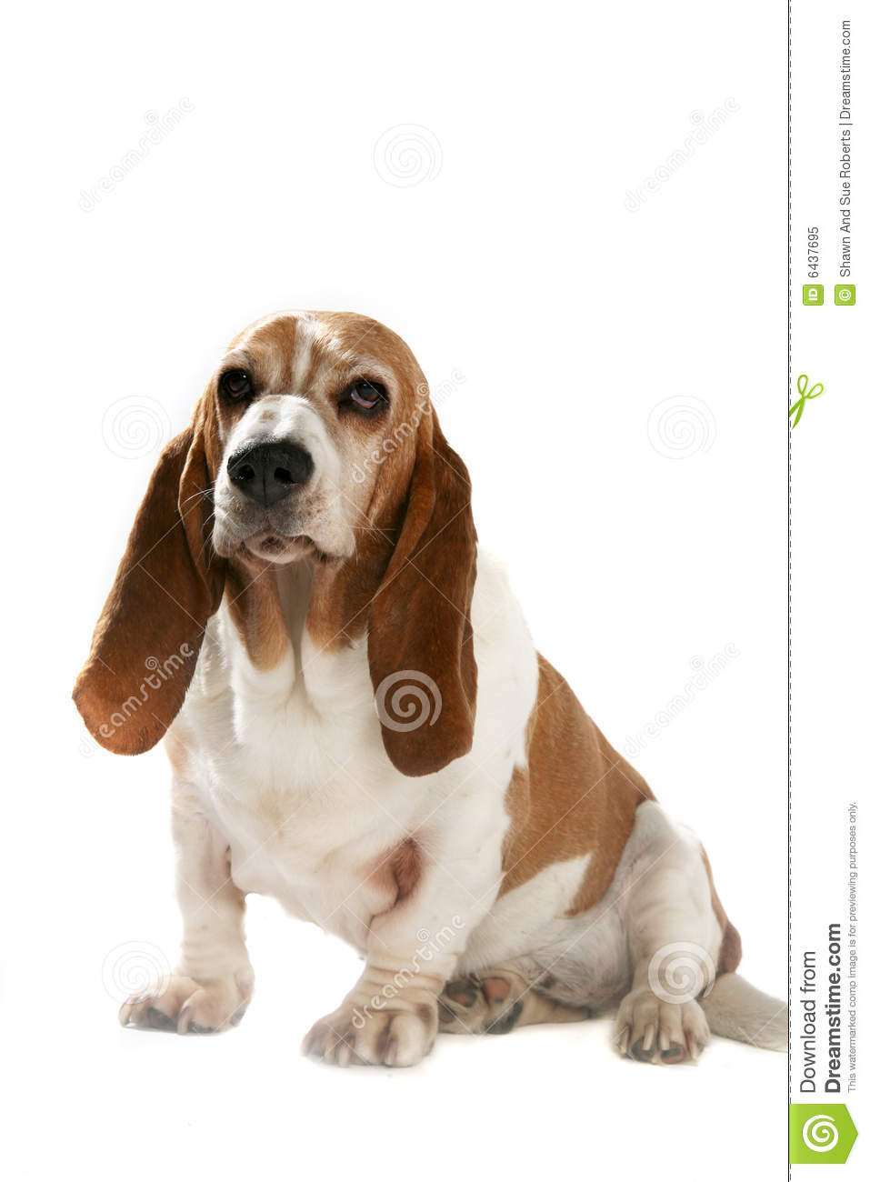 Dog with big ear clipart jpg stock Dog clipart short ears - ClipartFest jpg stock