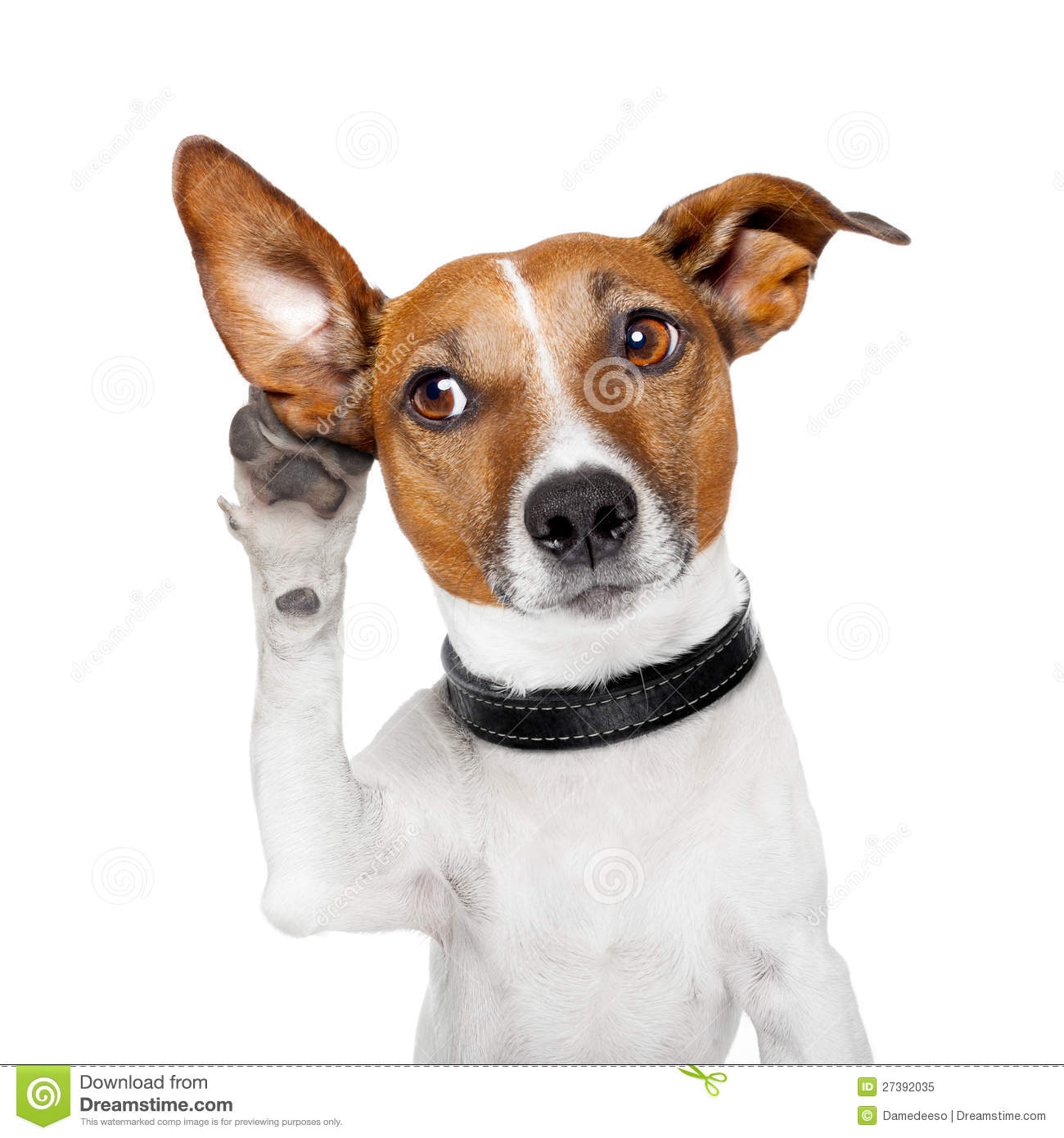 Dog with big ear clipart clipart freeuse stock Animals and Pets Stock Photos and Royalty Free Images clipart freeuse stock
