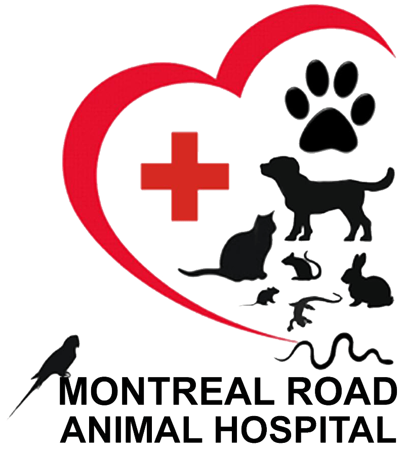 Dog xray clipart free download Facility - Montreal Road Animal Hospital free download