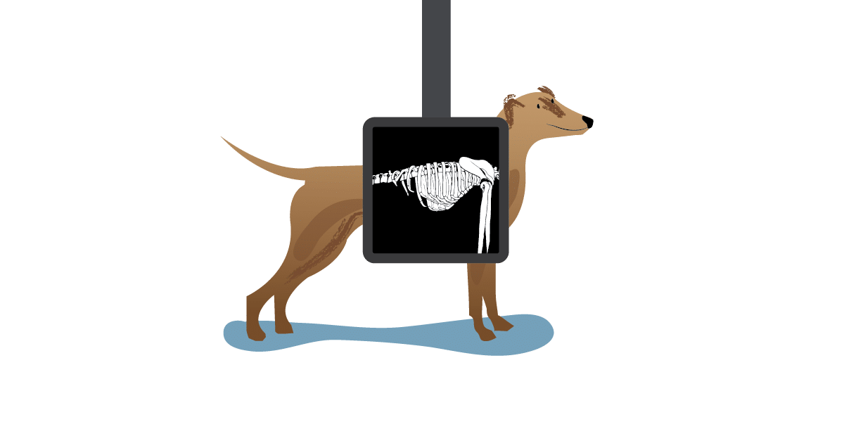 Dog xray clipart free library 19 Xray clipart dog xray HUGE FREEBIE! Download for PowerPoint ... free library